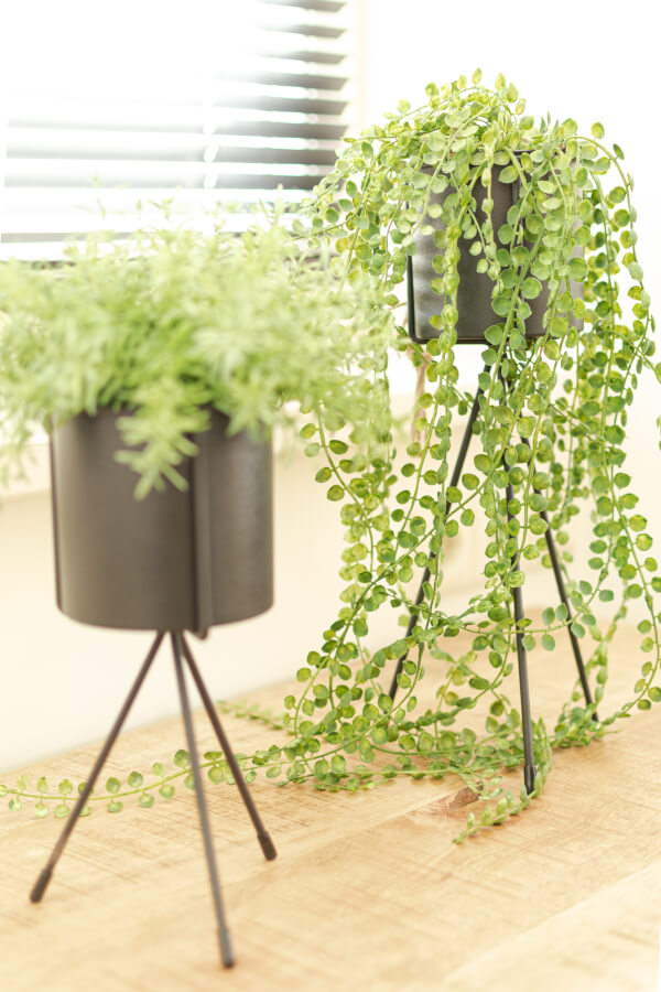 detail planten slaapkamer